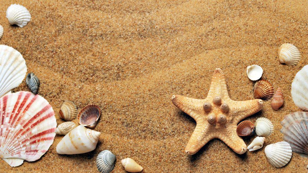 Zand schelpen strand zeester