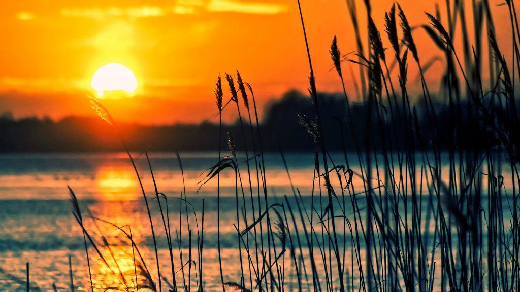 Water riet zonsondergang